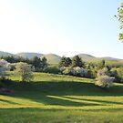 Apple Blossom Trees by ChereeCheree