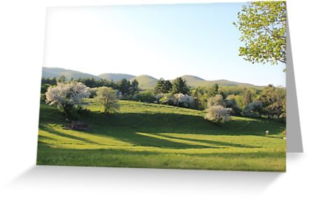 Apple Blossom Trees by ChereeCheree