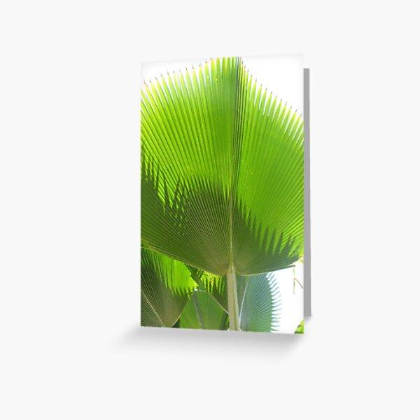 Giant Green Hawaiian Fan Palm Greeting Card