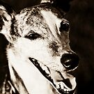 The Smiling Whippet by Nancy Stafford