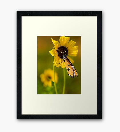 The Butterfly and Yellow Flower-Sequel#3 Framed Print