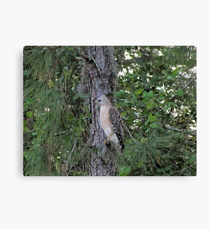 The Mean Hawk Canvas Print