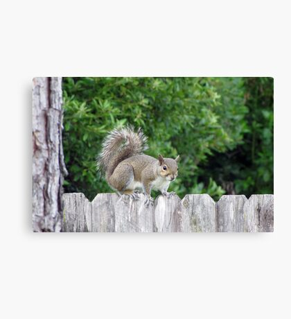 Whatcha Doin? Canvas Print