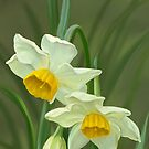 Forest narcissus by Victoria  _Ts
