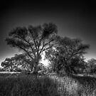 The Darkside of Trees by Bob Larson