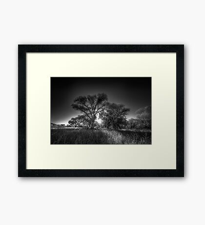 The Darkside of Trees Framed Print