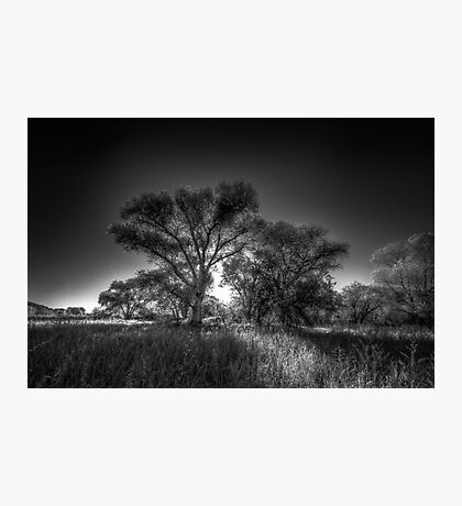 The Darkside of Trees Photographic Print