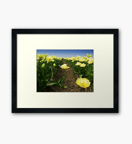 Tulips - One Step Out  Framed Print