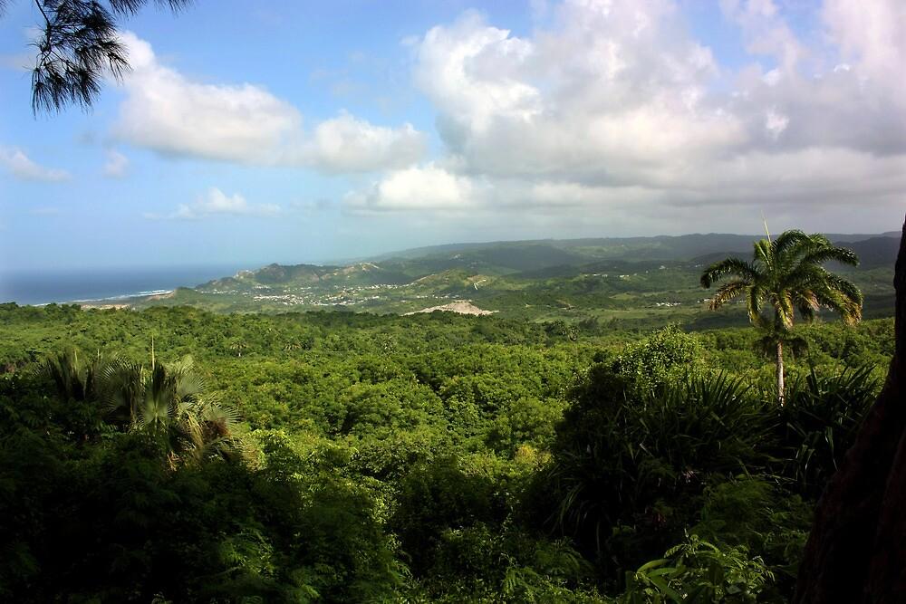 Barbados East Coast View - Farley Hill, Barbados by MikeyRap