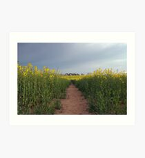 Down with the oilseed Art Print