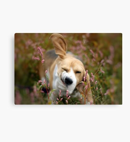 And just a shake to the head . . . .  Canvas Print
