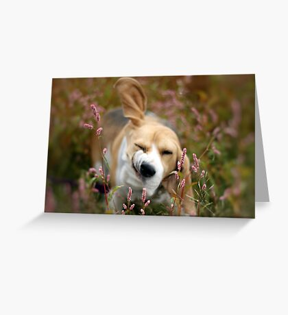 And just a shake to the head . . . .  Greeting Card