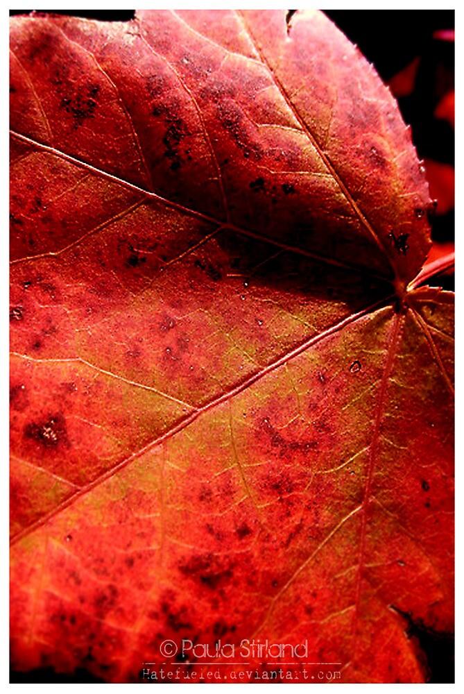 Autumn Warmth by Gozza