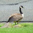 A Goose Up Close by Monica Engeler