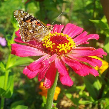 beautiful zinnia flower and butterfly by Silversky2212