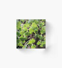 Microgreens seeds botanical Acrylic Block