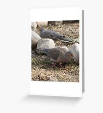 hungry dove Greeting Card