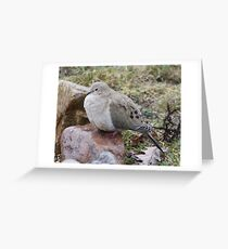 fluffy dove Greeting Card
