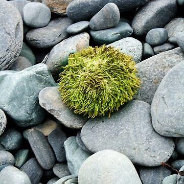 Sea Urchin by StephWilliams