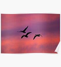Home to Roost Poster