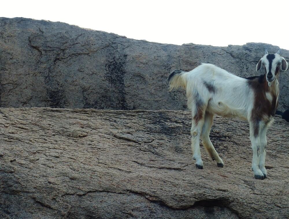 Goat 2.0 - Mahabalipuram by clarebearhh
