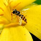 busy visitor by lensbaby
