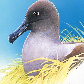 light mantled sooty albatross by hartpix