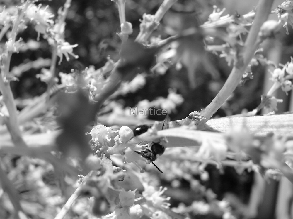 Lonely Ant-B&W by Martice