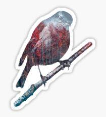 Forest Robin on a Branch  Sticker