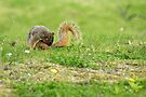 Nibbling that Itch by Richard Williams