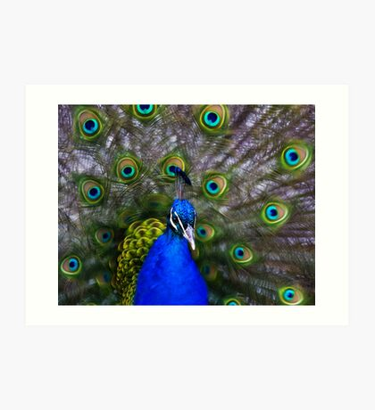 ...Let me see you shake your tail feathers :) Art Print