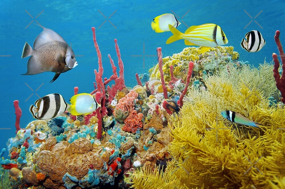 Colorful underwater marine life in a coral reef by Dam - www.seaphotoart.com