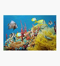 Colorful underwater marine life in a coral reef Photographic Print