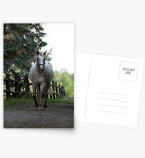 Caramel - NNEP Ottawa, ON Postcards