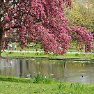 Spring has sprung by Heather Thorsen