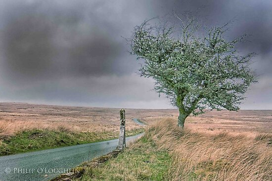 North Wales Tree by Philip65