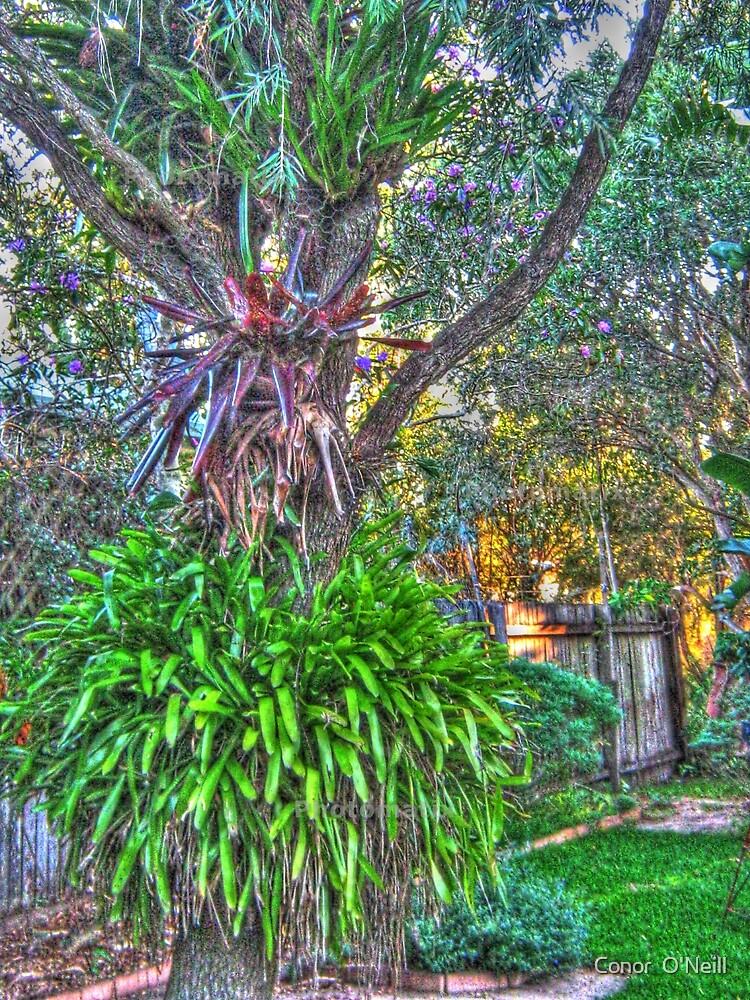 Tree by Conor  O'Neill