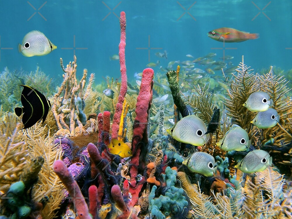 Coral reef with colorful sponges and tropical fish by Dam - www.seaphotoart.com