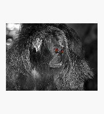 Piercing Eyes Photographic Print
