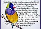 The Gouldian Finch by Elizabeth Kendall