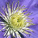 Clematis<><><><> Up Close by BobJohnson