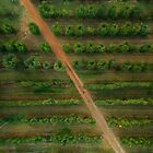 Orchard from above by nathandobbie