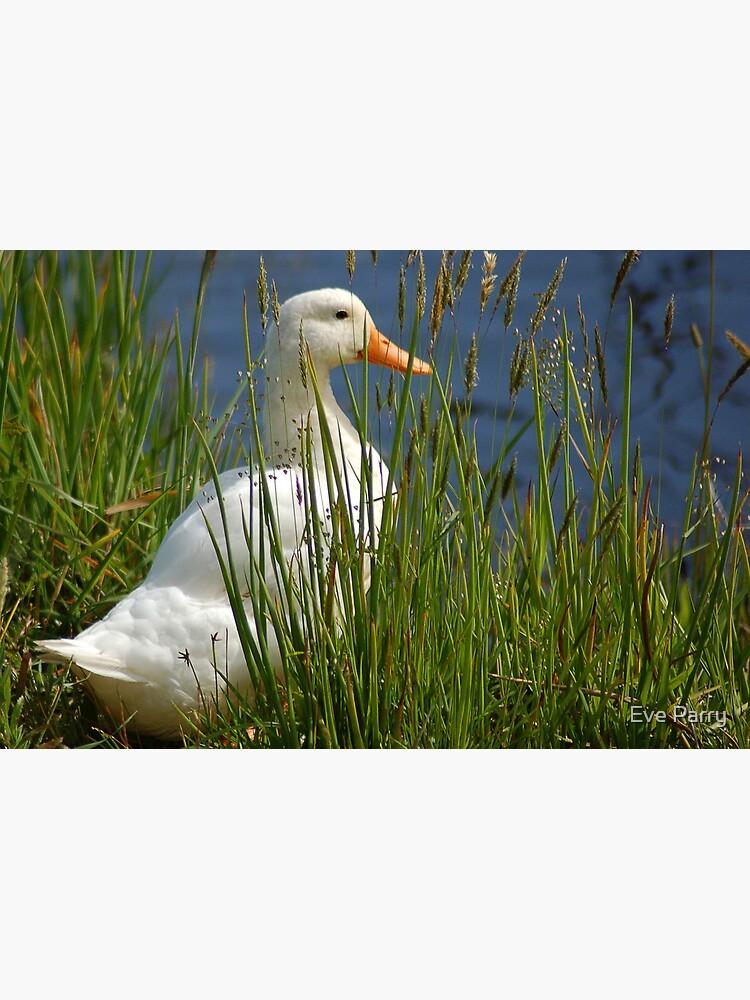 Pretty White Duck by AdamsWife
