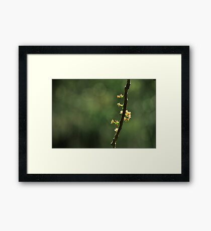 Bits of Beauty Framed Print