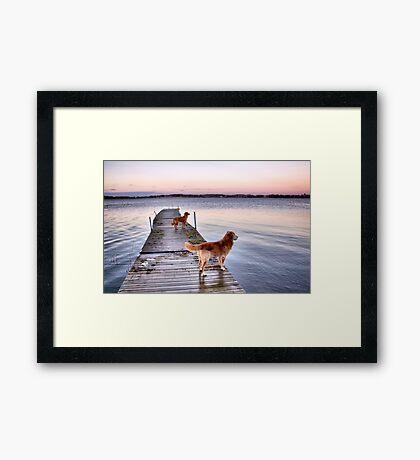 Sunset dogs Framed Print