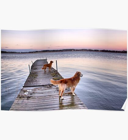 Sunset dogs Poster