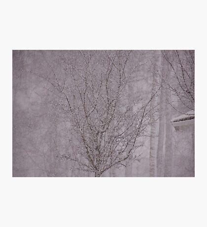 Snowy haiku Photographic Print