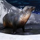 A Seal by Atiger97