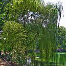 A Walk by the Willows by ECH52