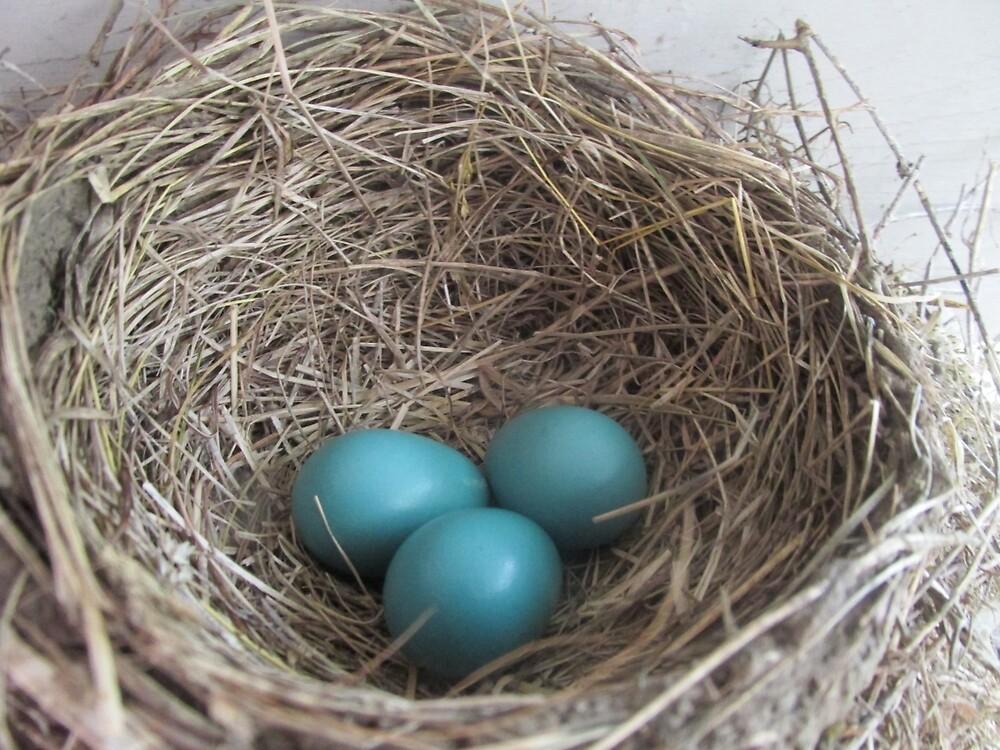 Robin Eggs by vkrivak